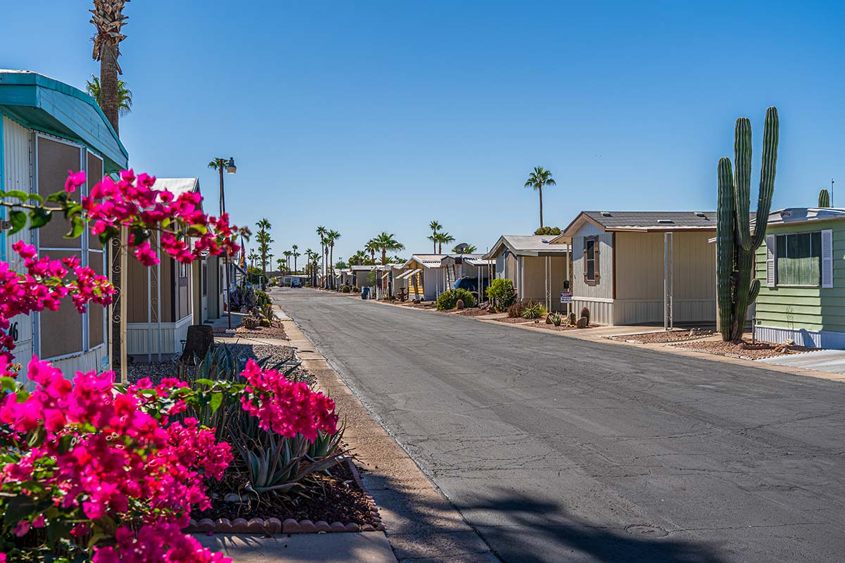 Native plants along paved streets in El Dorado Mobile Estates Resort