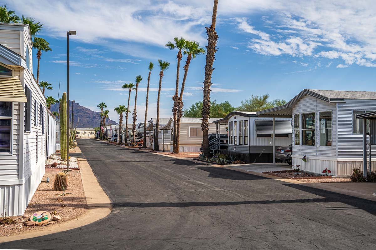 Paved streets lined with tall palms at Superstition Lookout RV Resort